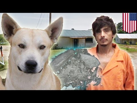 Dog Betrays Meth-head Owner By Leading Police Straight To His Alabama Hiding Spot video