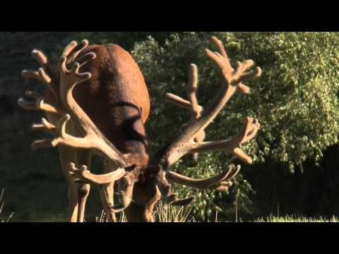 cardrona-safaris-new-zealand-hunters-video.html
