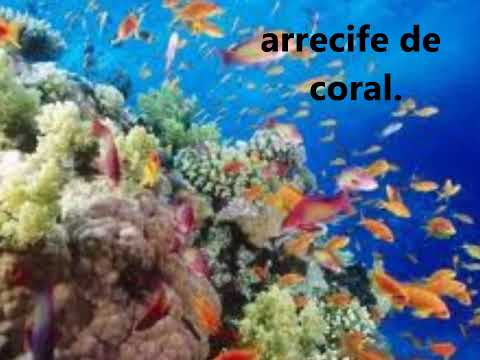 CLASE DE LOS ECOSISTEMAS video educativo.wmv
