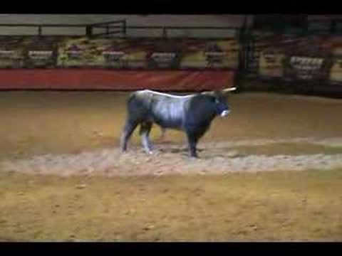 PBR Premier Bucking Bull Sale Video