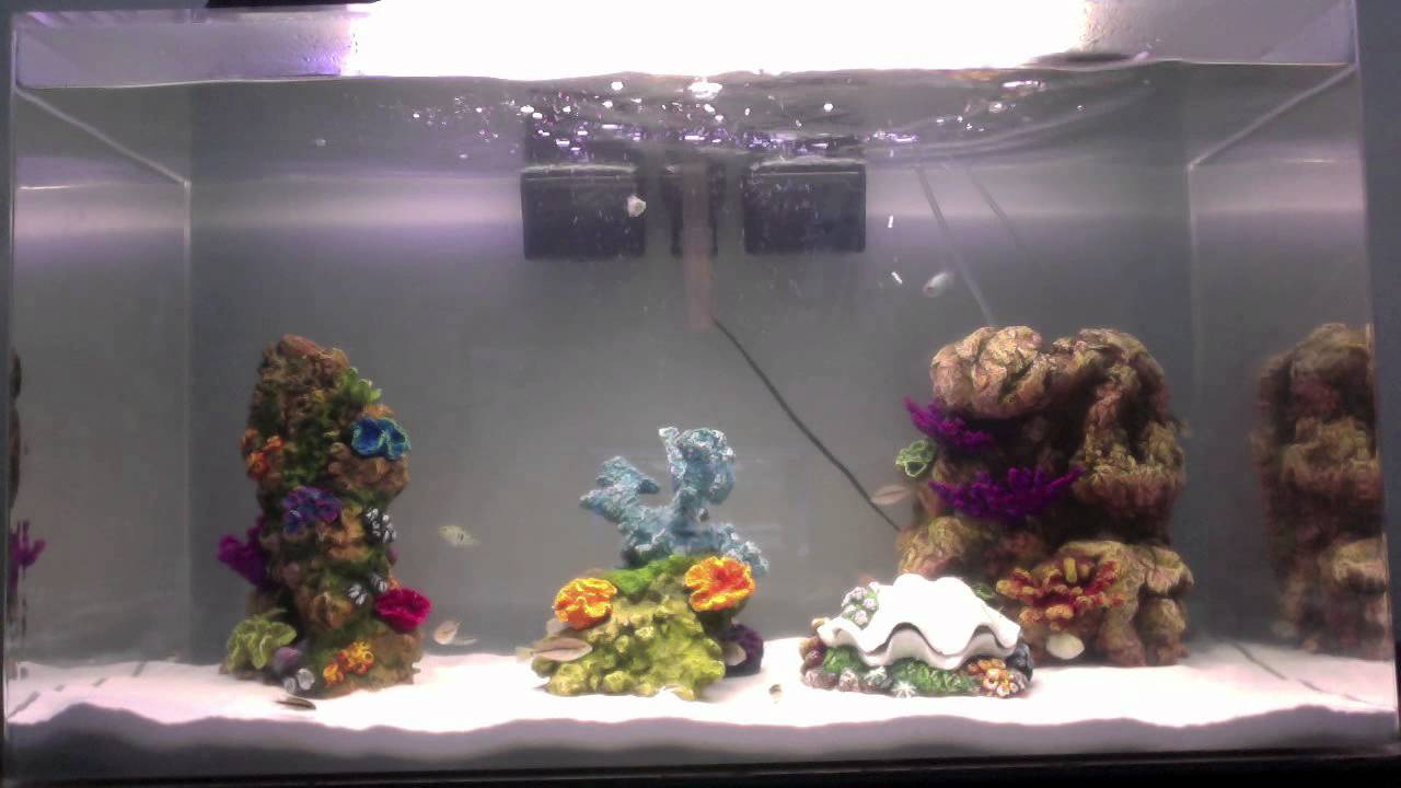 50 gallon seaclear aquarium - YouTube