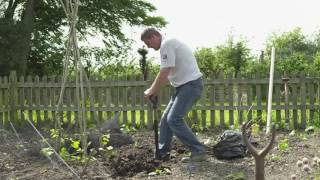 Explainer Video - How to Plant Your Bare Root Fruit Tree