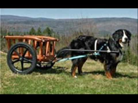 Wfbg 1290 Am - Charlie And Dick In The Morning - Unemployed Dogs - Carting