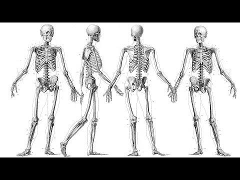 Black Teeth and Big Bones: British Height and Diet through History - Professor Charlotte Roberts