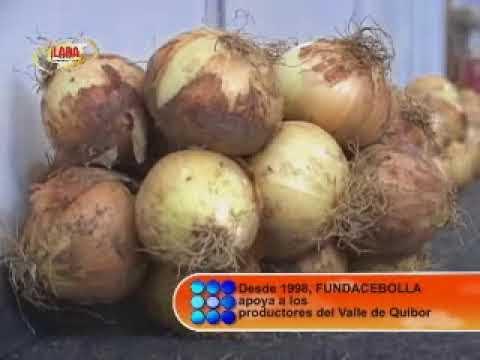Cebolla Fuerza Agrícola en Quibor