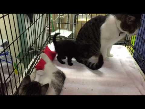 ニャフレと子猫ちゃん