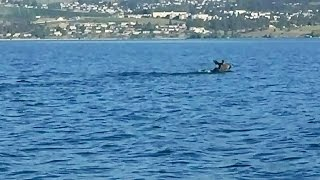 Mysterious creature in Okanagan Lake: What is it exactly?