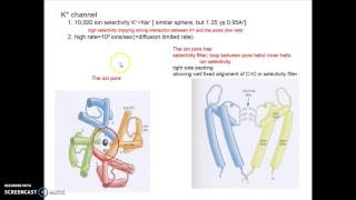 Chapt 12 Membrane protein Pt 2 Porin and K+ channel