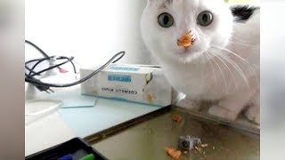 Warning: SO FUNNY it may cause HEART ATTACK! - Super FUNNY ANIMAL videos