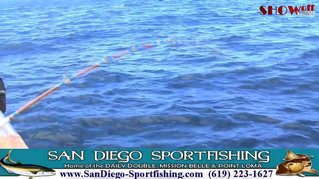 San diego sportfishing on mission belle point loma and for Point loma sportfishing fish count