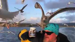 Best funny videos - xem là cười - khi động vật nổi loạn - try not to laugh