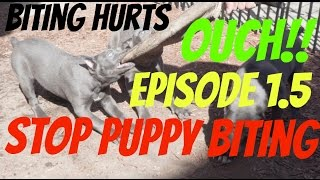 stop puppy biting or nipping pup bite mouthing elimination pit bull dog shepherd
