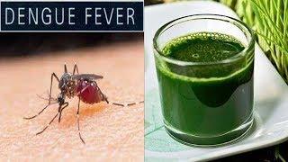 டெங்கு வராமல் தடுக்க இதை மட்டும் செய்யுங்கள் | Home Remedy for Dengue Fever