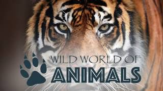 Wild World of Animals