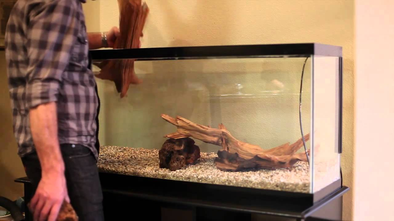 55 gallon aquarium makeover youtube for 55 gallon aquarium decoration ideas