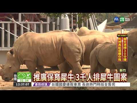 922世界犀牛日 3千人排犀牛圖