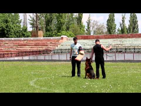 Международная выставка собак 2014 - Кубок Мира