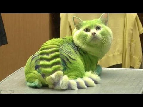 15 Cats With Dragon Hair Cuts Looking So Dangerous!  █▬█ █ ▀█▀
