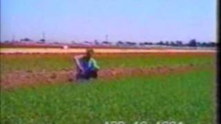 Hemp Farming Imperial County, California Seed Food and Fiber 2012