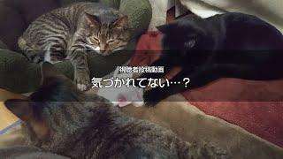 気づかれていない…? 猫動画