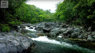 10 Hours Of Relaxing Planet Earth II Jungle Sounds - Earth Unplugged