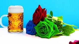 Ergebnis nach 10 tagen - Rosen in Bier und Coca Cola