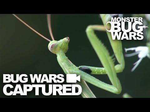 Bug Wars Captured   Compilation #3   MONSTER BUG WARS