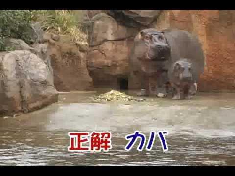 王子動物園 どうぶつ鳴き声クイズ