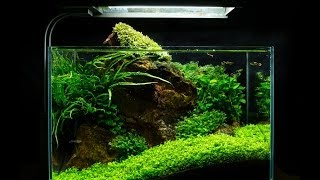 Red Rock Nano Aquascape by James Findley