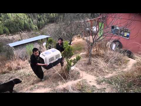 Bhutan Animal Rescue and Care (BARC) - Thimphu Shelter