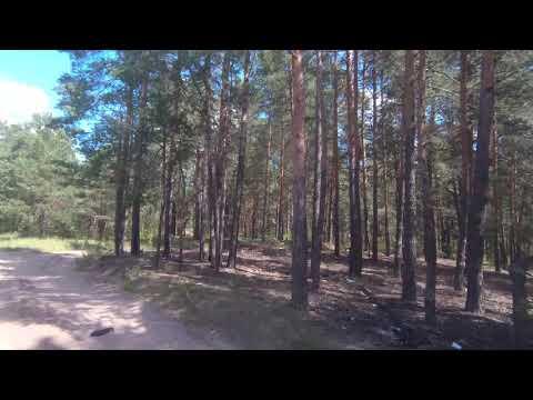 ПРИКОЛ Это же просто дорога в лесу! МАТ