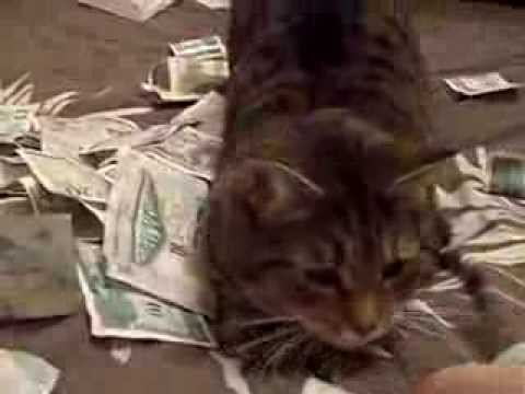 Cats Money Cat Rolling Around in Money