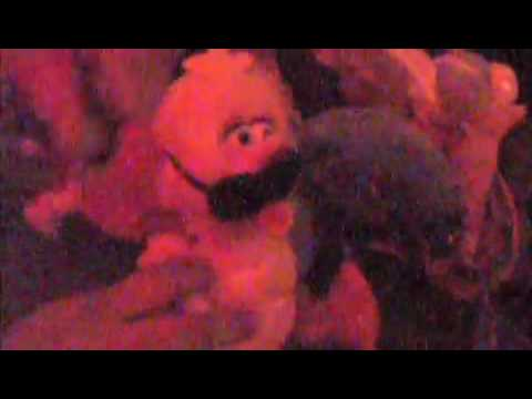 Stuffed Animal Xxx video