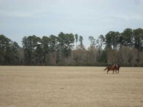 Horse Helicopter Helicopter Horse Herding With