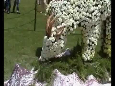 Ooty Flower Show 2012