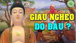 Giàu Nghèo Do Đâu - Phật Dạy Người Tuy Nghèo Nhưng Chí Không Nghèo | Đều Do Quả Báo Từ Kiếp Trước