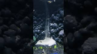 Underwater waterfall fishtank community fish