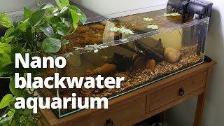 Nano blackwater aquarium build with neon tetras