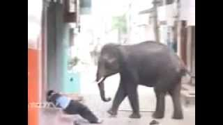 Angry elephant attacks in india 2015 most dangerous video in the world
