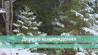 Экологика.ТВ: Дерево возрождения