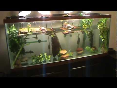 New 55 gallon turtle tank youtube for 55 gallon fish tank setup