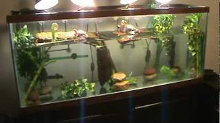 How to Set Up an Aquatic Turtle Tank Pet Turtles. ????? ?? ...