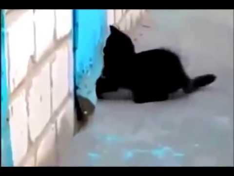 Gato rescata a perro atrapado tras una puerta