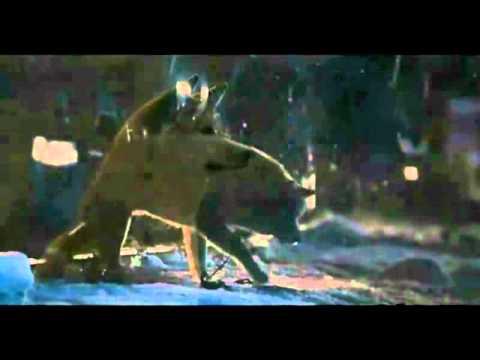 Видео как снимали Хатико