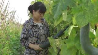 Thanh niên với Nông nghiệp hữu cơ (bản slides)