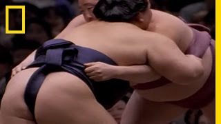 Sumo | National Geographic