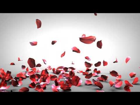 Falling Rose Petals video
