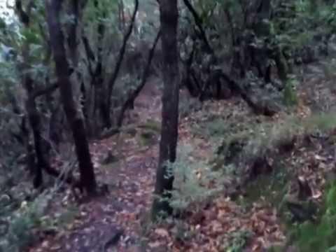 Marco Stagnaro (MIRKO) La caccia con il chioccolo (12) - P 1