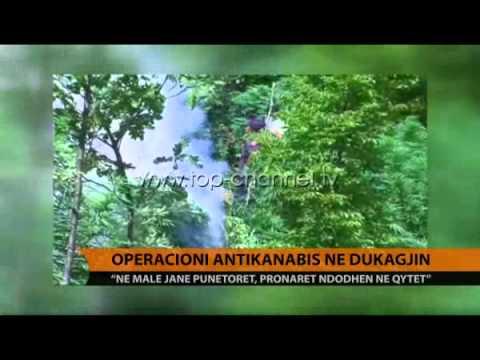 Operacioni antikanabis në Dukagjin - Top Channel Albania - News - Lajme