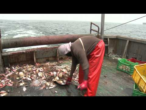 Pan-African small-scale fisheries 1 Overexploitation and IUU fishing